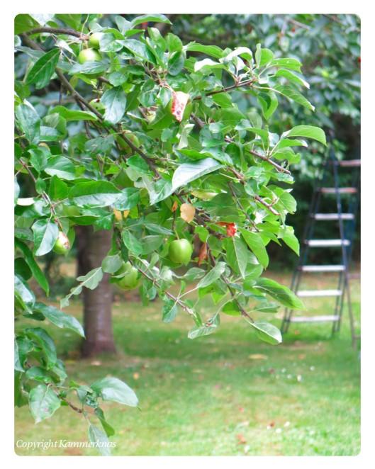 Æbletræet