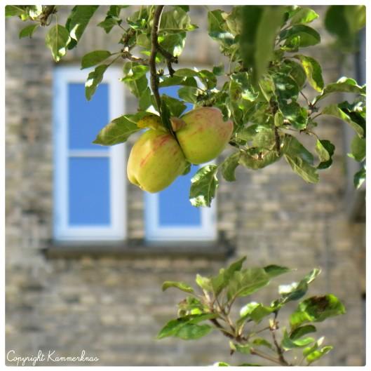 Æbletræ 1