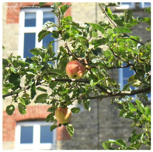 Æbletræ 2