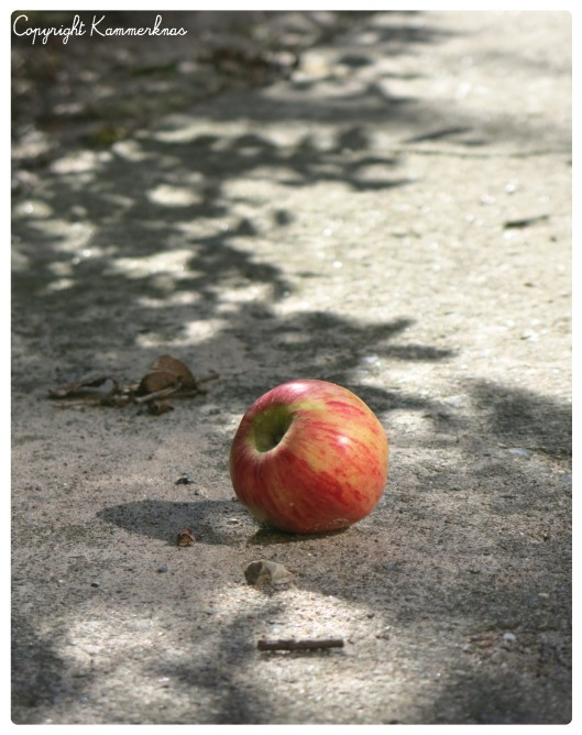 Æbletræ 3