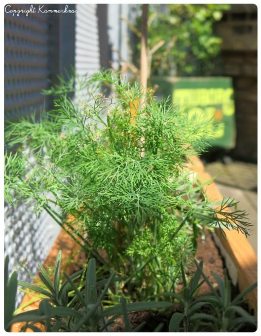Plantekasser 2